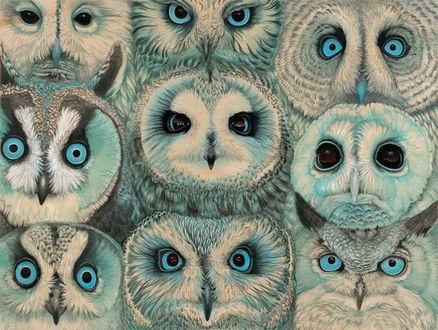 Фото Группа сов с разным выражением глаз, художник Tiffany Bozic / Тиффани Божич
