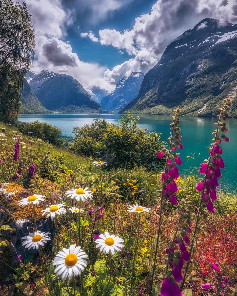 Фото На переднем плане полевые цветы перед озером среди гор, фотограф Lauri Lohi