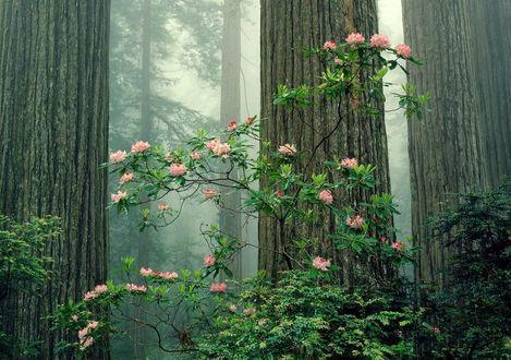Фото Цветущий куст на фоне больших лесных деревьев