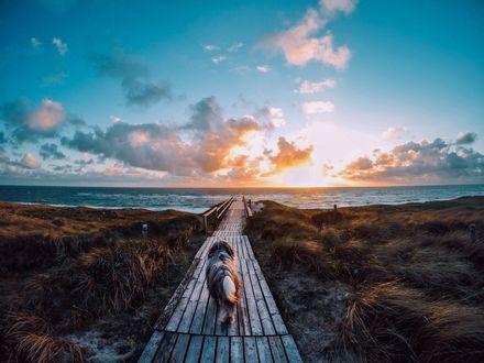 Фото Собака идет по мостику к морю
