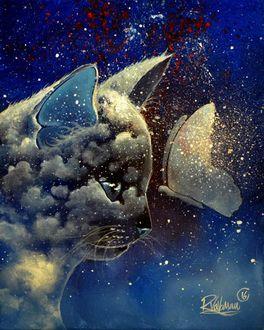 Фото Кошка, с изображением облаков на мордочке, смотрит на бабочку, by Raphael Vavasseur