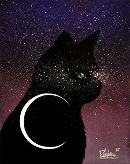 Фото Черная кошка с месяцем на ней, by Raphael Vavasseur