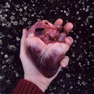 Фото Сердце в руке (© D.Phantom), добавлено: 14.07.2017 09:41