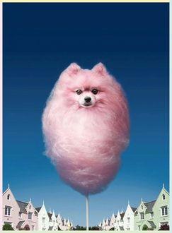 Фото Реклама сахарной сладкой ваты на палочке в виде розовой собачки на фоне неба и домов