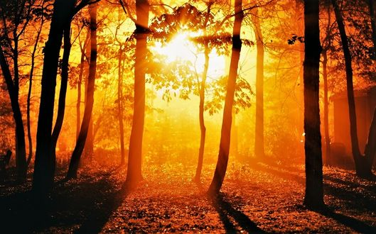 Фото Золотое солнце сквозь деревья в лесу