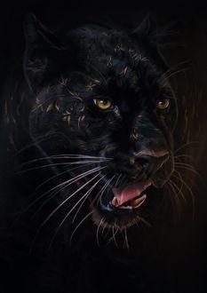 Фото Черная пантера с узором на морде, иллюстратор Aykut Aydogdu (© zmeiy), добавлено: 15.07.2017 20:47