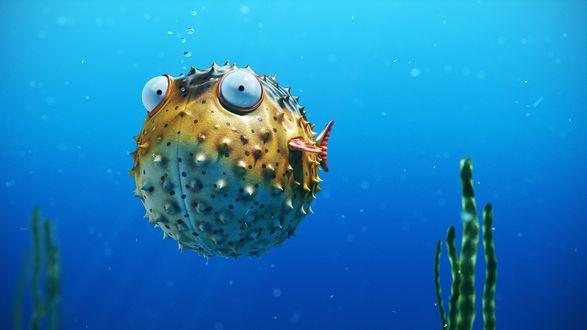 Фото Удивленная рыба-шар раздулась