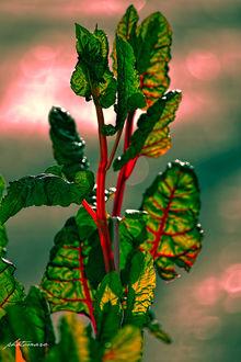 Фото Зеленые листья крупным планом