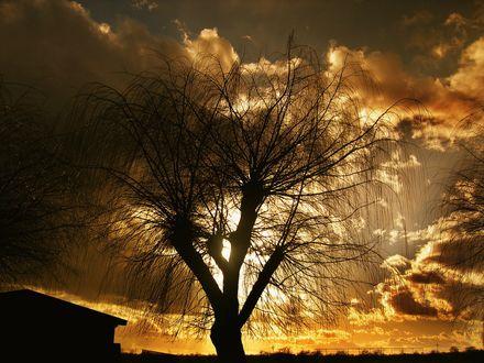 Фото Дерево без листвы на закате