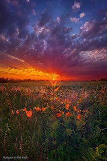 Фото Оранжевые полевые цветы на закате, by Phil Koch