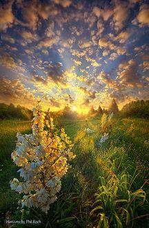 Фото Белые цветы в солнечных лучах, by Phil Koch