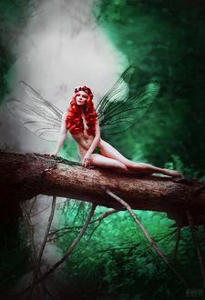 Фото Девушка с крылышками сидит на упавшем дереве, фотограф Светлана Беляева