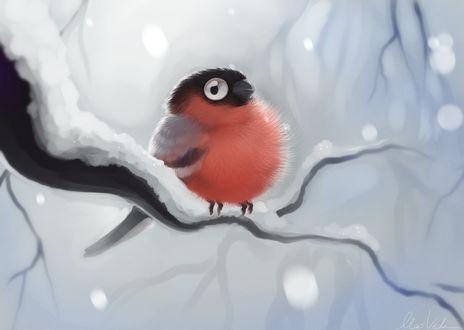 Фото Пухлый снегирь на заснеженной ветке, by Kirwick
