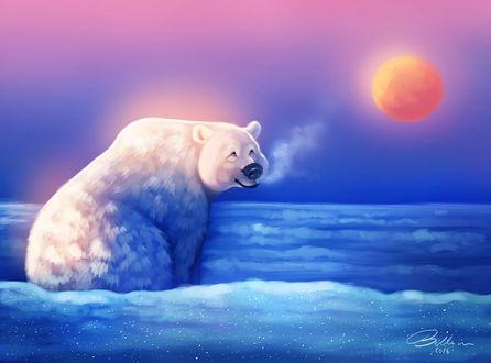 Фото Полярный белый медведь, by Witse99