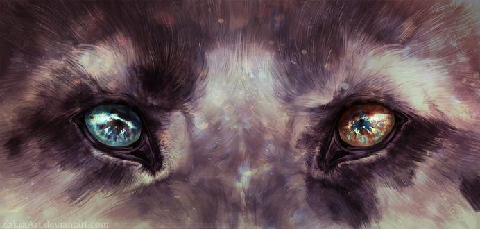 Фото Разноцветные волчьи глаза, by ZakraArt