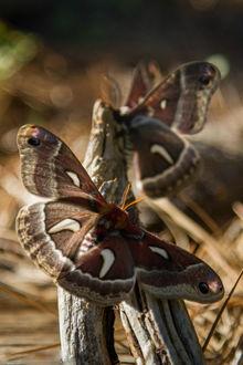 Фото Бабочка сидит на коряге