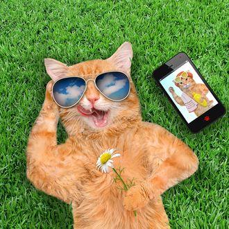 Фото кот гадает на ромашке