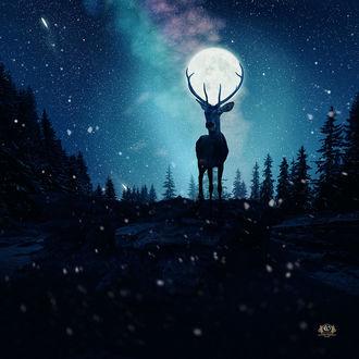 Фото Луна в оленьих рогах, фотограф Caras Ionut
