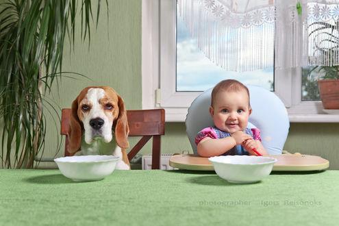 Фото Ребенок и бигль сидят за столом в ожидании завтрака, фотограф Игорь Рейшонок