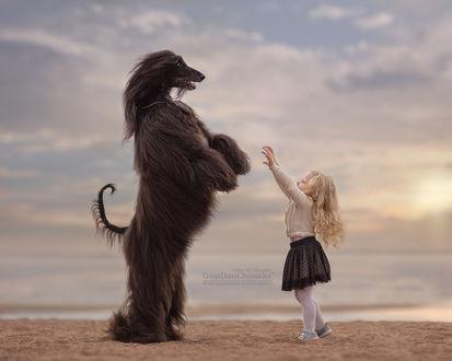 Фото Девочка тянется к афганской борзой, стоящей на задних лапах, фотограф Андрей Селиверстов
