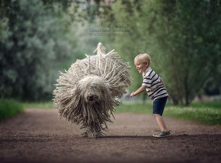 Фото Мальчик с комондором бегает в парке, фотограф Андрей Селиверстов