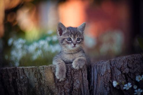 Фото Котенок на деревянном ограждении, фотограф Юрий Коротун