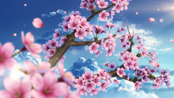 Фото Весенняя цветущая ветка на фоне неба