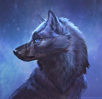 Фото Голубоглазый серый волк, by ZakraArt