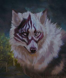 Фото Волк с кровавым рисунком на морде, by ZakraArt
