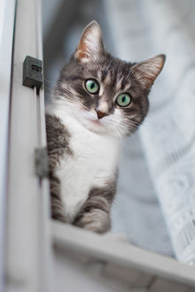 Фото Кот выглядывает из окна, фотограф Роман Алябьев