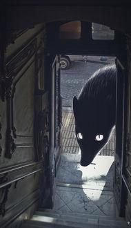 Фото Огромное темное существо со светящимися белыми глазами смотрит через открытые двери с улицы в подъезд, автор Антон Марраст, известный под ником Grape Frogg