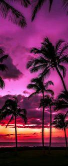 Фото Пальмы на тропическом острове на фоне вечернего неба