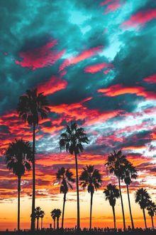 Фото Пальмы под вечерним небом