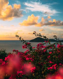 Море и цветы фото