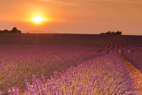 Фото Лавандовое поле на фоне заката, фотограф Agnеs Perrodon