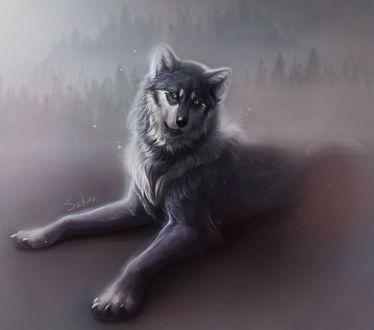 Фото Волк с разного цвета глазами, by Safiru