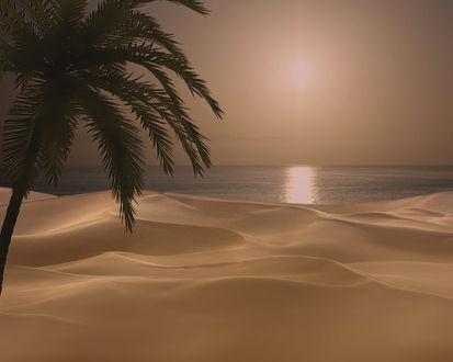 Фото Пальма в песках у моря, фотограф atit