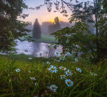 Фото На первом плане ромашки в траве перед озером, фотограф Федор Лашков