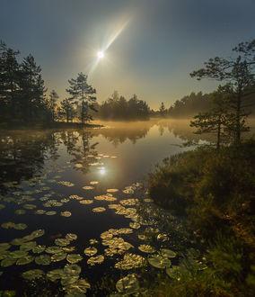 Фото Полная луна на озере, Север Ленинградской области. Август 2017 года, фотограф Федор Лашков