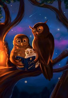 Фото Семейство сов за чтением книги, by Mellodee