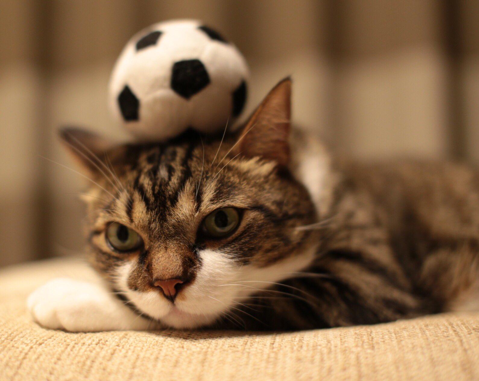 картинки котенок с мячиком пони работает