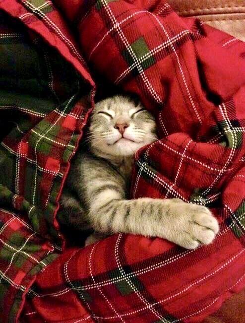Фото Кот в красном клетчатом пледе