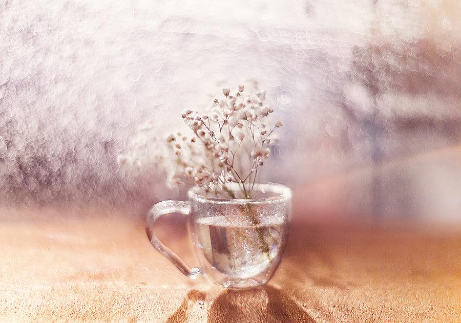 Фото Веточка белых цветов в чашечке с водой, фотограф Kristina Makeeva