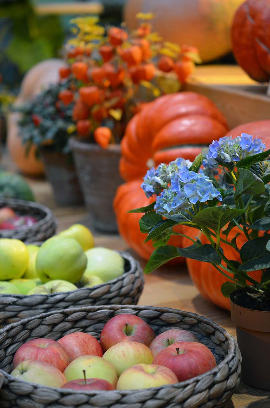 Фото Осенние овощи и фрукты
