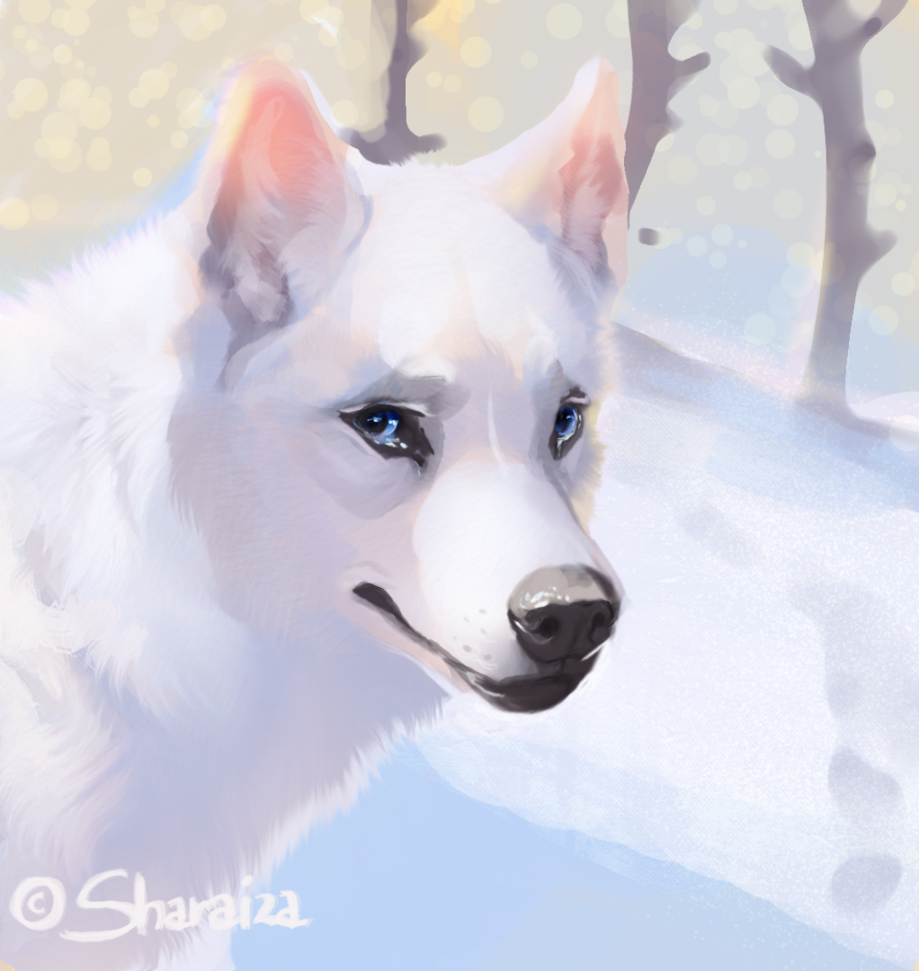 Фото Белая хаски с голубыми глазами, by Sharaiza