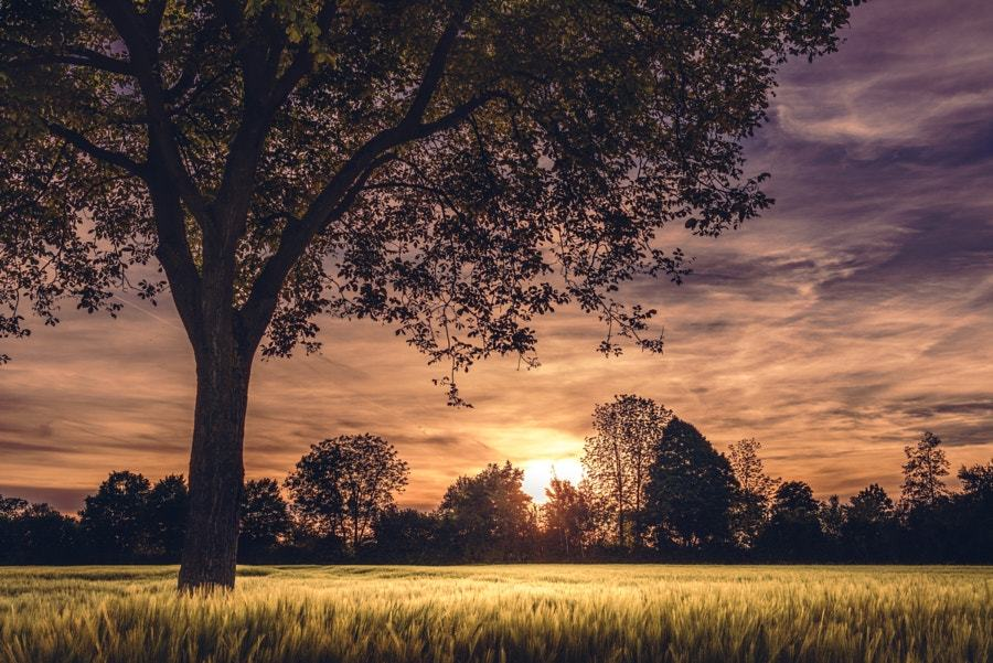 Фото Закат солнца над полем, by Jeffrey Field