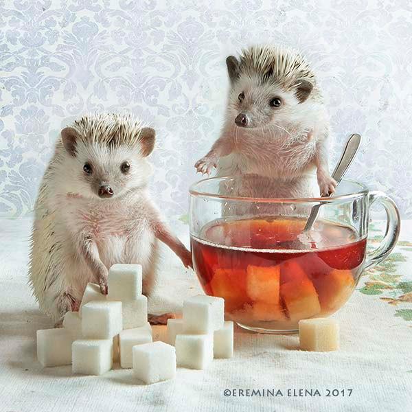 Фото Ежики собираются пить чай с кусковым сахаром, Elena Eremina 2017