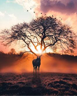 Фото Олень стоит на фоне солнца, которое светит сквозь ветви дерева, находящегося прямо на месте рогов, by Ronald Ong