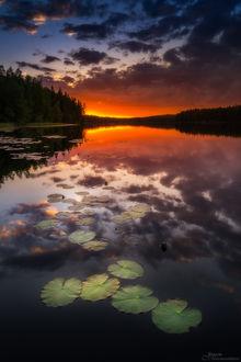 Фото Водяные лилии в спокойной воде озера Луома, фотограф Juuso Oikarinen