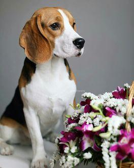 Милые собачки с цветами фото